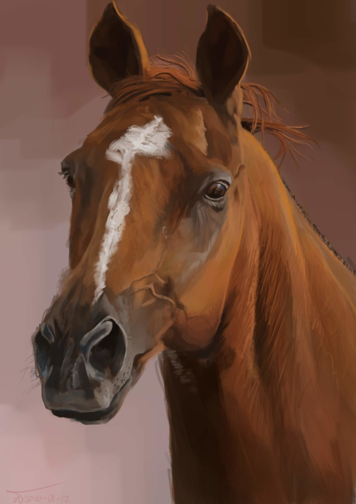Drawing of a horse's head