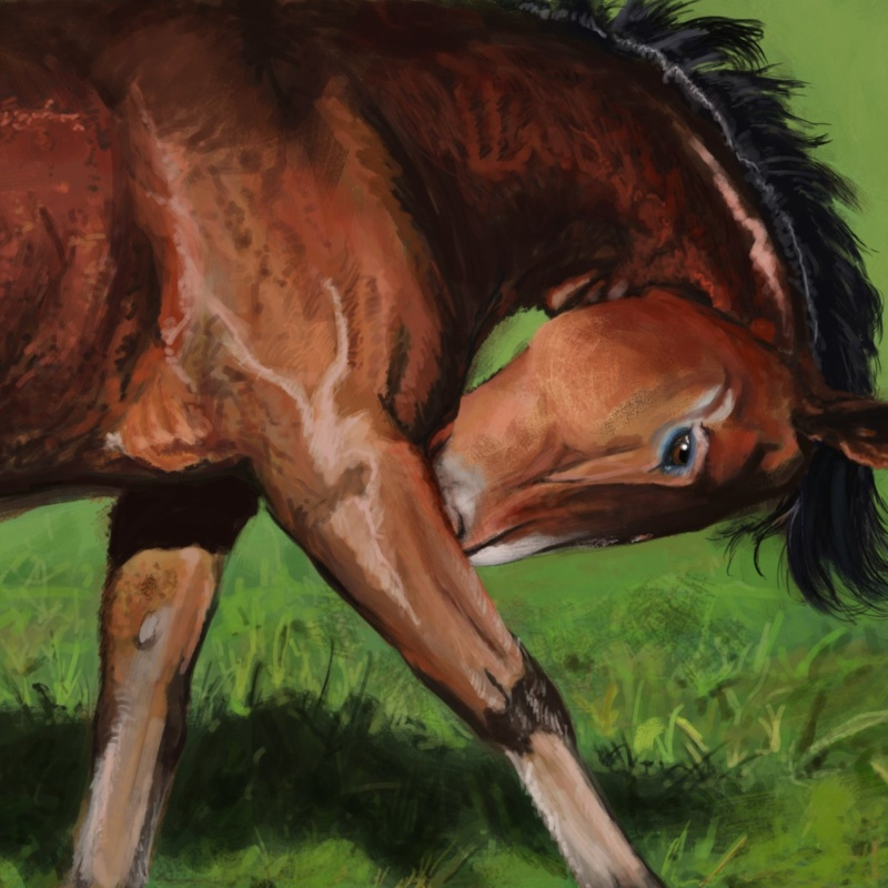 Drawing of a young horse in a field v2